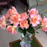 Roses recovered from the storm