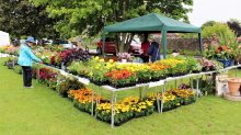 Plant Stall 2019 - click to enlarge
