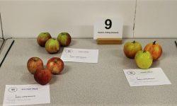 Class 9:  Apples, eating (dessert)