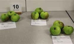 Class 10:  Apples, cooking