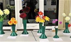 Classes 3 & 4: Dahlias Waterlily & Other types