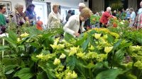 2019 Plant Sale - click to enlarge